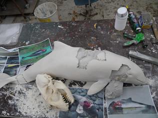 bruinvis aangevallen door grijze zeehond