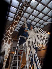 giraf 4