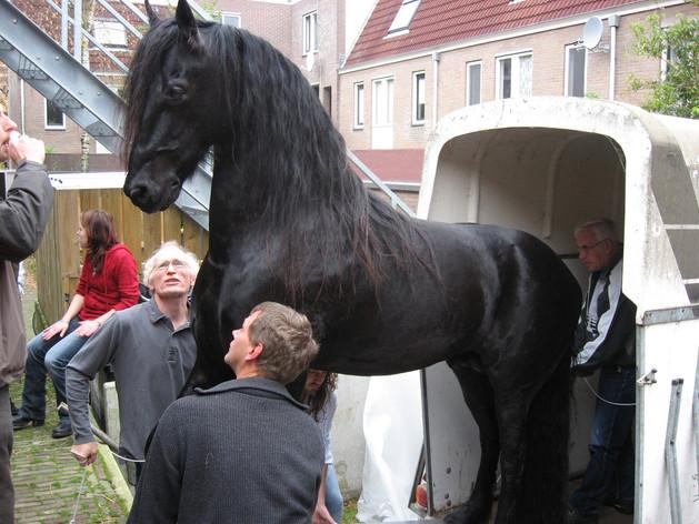 fries paard 2