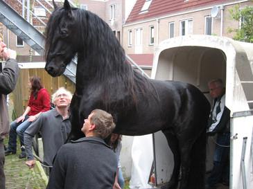 1900_paard.jpg