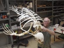 skelet montage