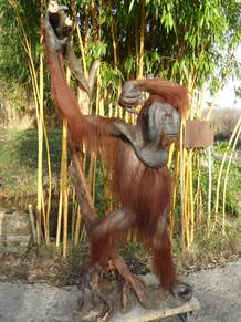 orang oetan bijna klaar 5
