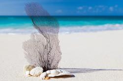 beach-84565