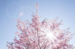 spring-733507