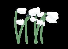 CL-_cotton grass.png
