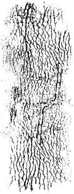 Kaisercraft® Leather Texture Stamp