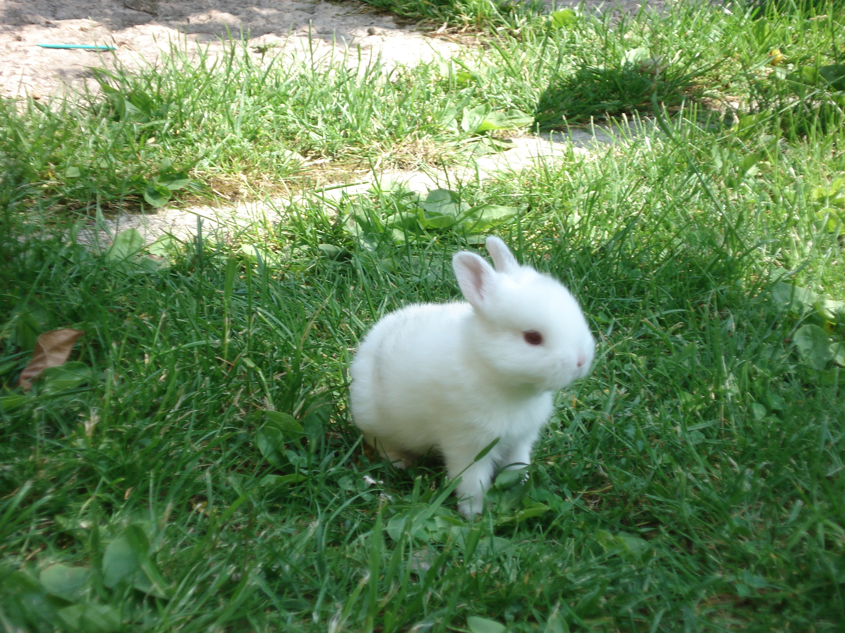 Our baby rabbit