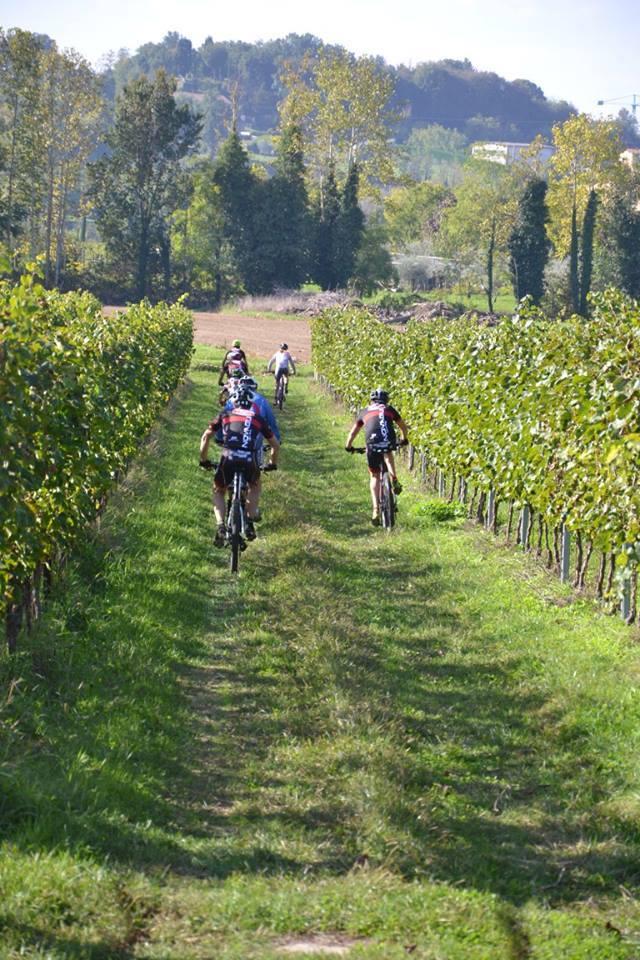 race among the vines