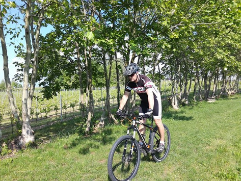 cycling among the vines