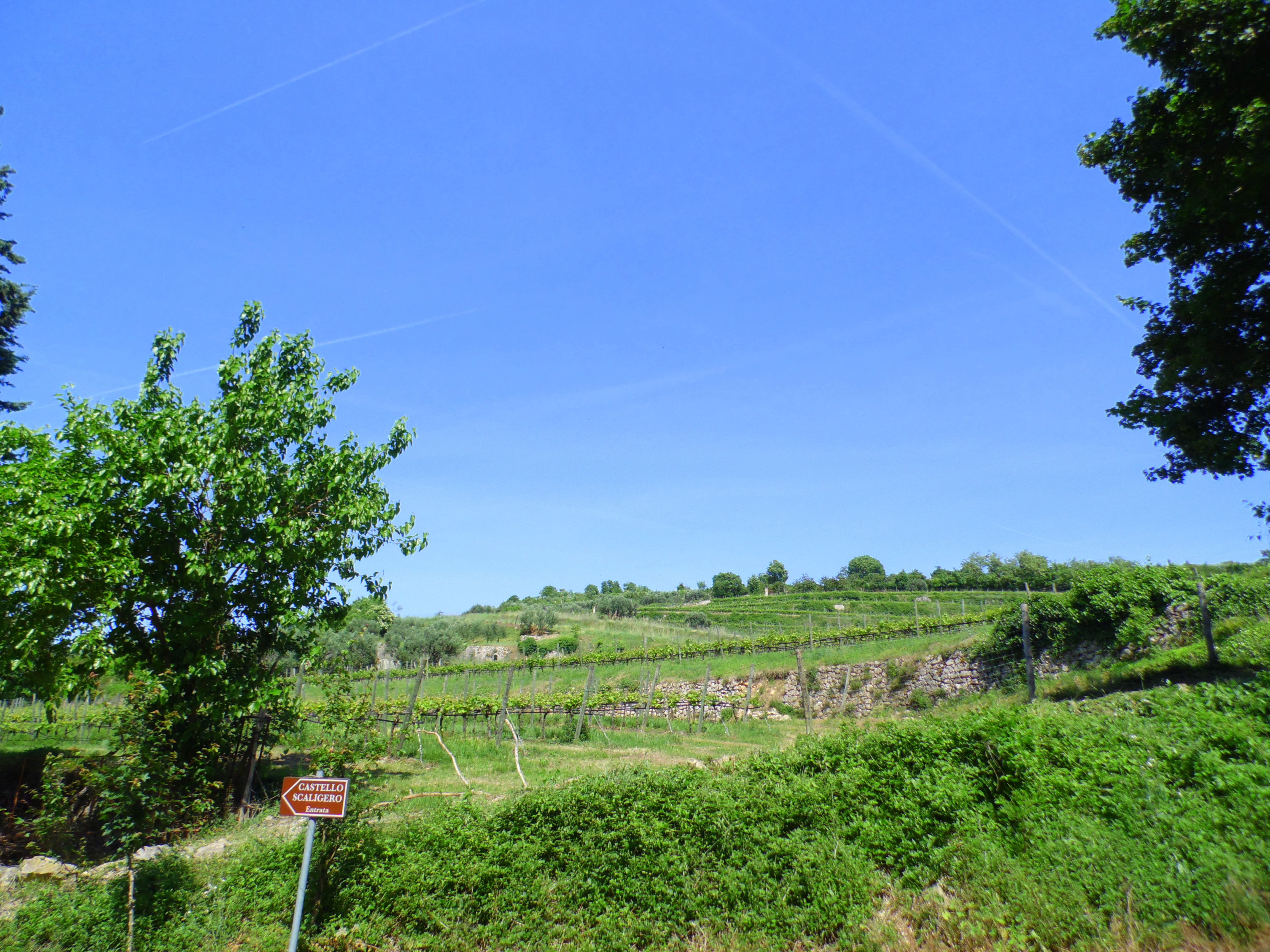The Soave wine region