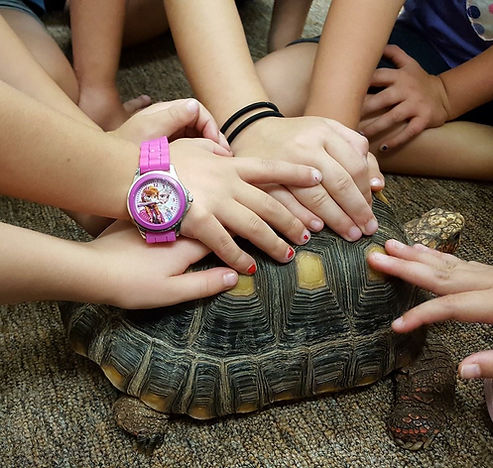 Creative Minds Montessori School Auburn NY
