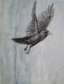 Crow and Stitch