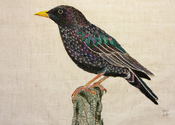 Hand Embroidery: Bird Portraits