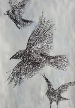 Sketchy Crows
