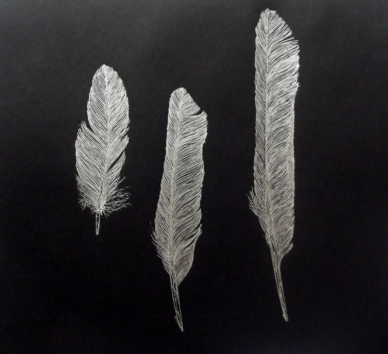 Silver Feathers