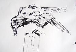 Crow on a post
