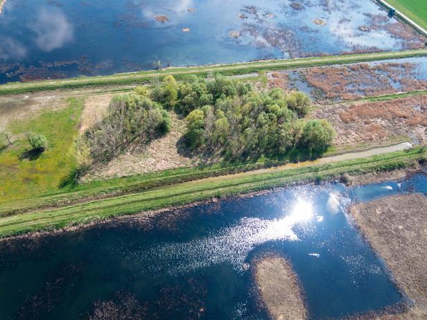 Sugar and Birds (and Buffaloes): Ormož Basins Nature Reserve