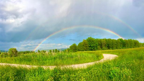 The Spark and the Rainbow