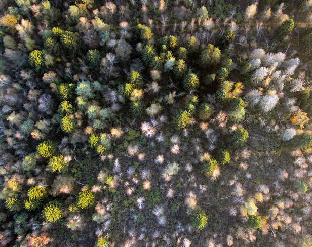 Kozler forest revisited