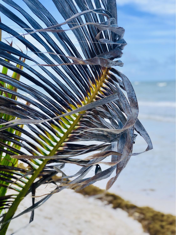 Ziggy Beach Tulum