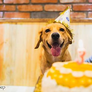 Dog birthday snap