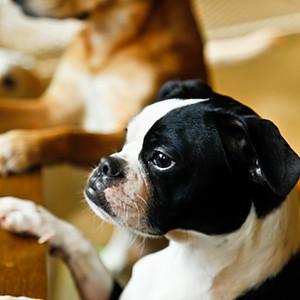 Dog snap