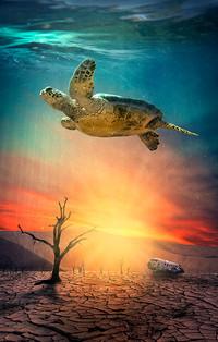 Underwater Desert