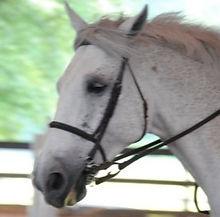horse, hunter/jumper, equine