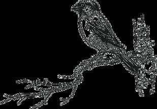 bird_1.png
