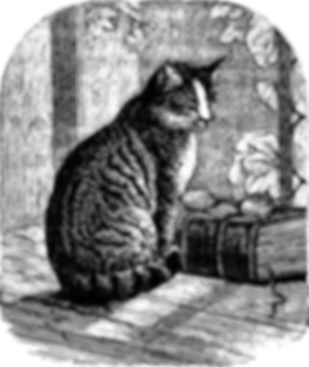 a cat and book