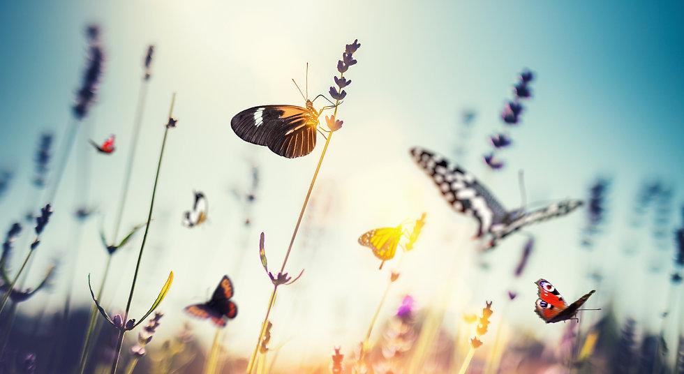 butterfly field.jpg