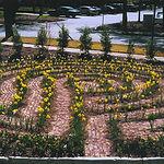 daffodil lybrinth.jpg