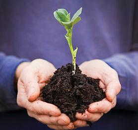 hand with plant purple shirt.jpg