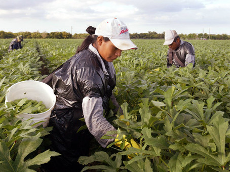 The Women Feeding Us: The effects of climate change on women in agriculture