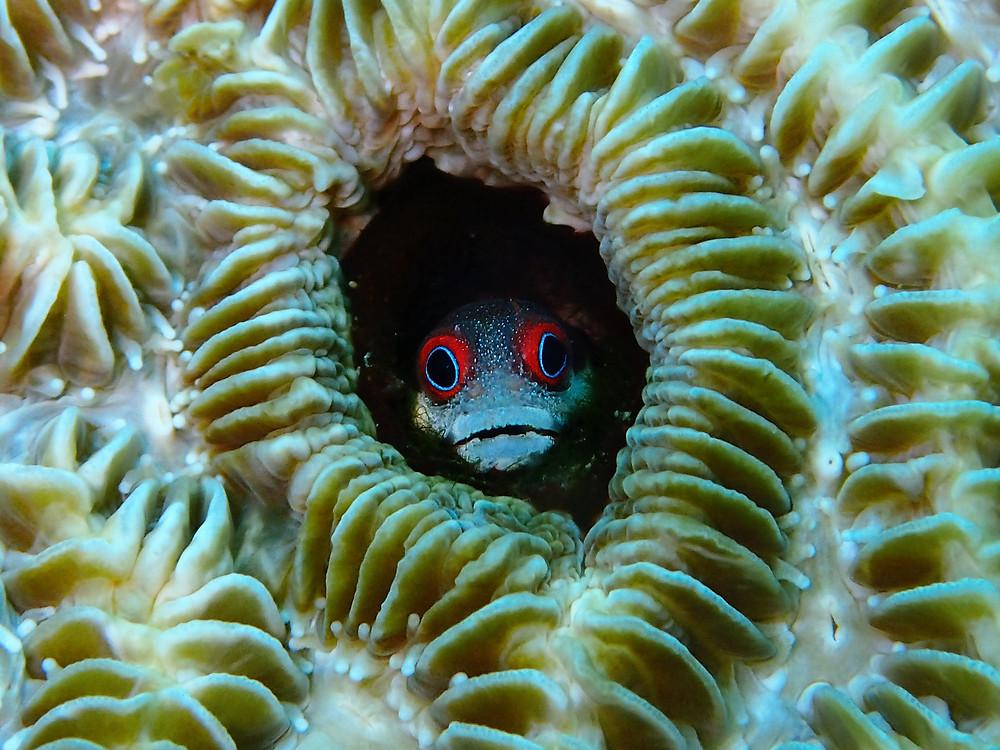 Fish in Panama