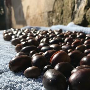 Oliven ernten und einlegen
