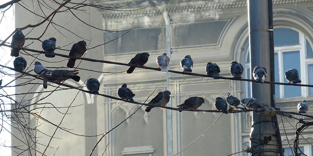 Winterstimmung in der Altstadt
