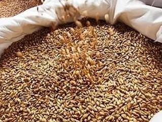 В связи с неблагоприятными погодными условиями рекомендуем для осеннего сева озимой пшеницы приобрет
