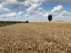 Информация. Лаборатория селекции и первичного семеноводства озимой пшеницы для аграриев Нечерноземья