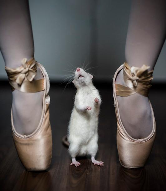 tierportrait-ratte-ballett-03.JPG