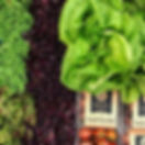 GreenhouseGoodie.jpg