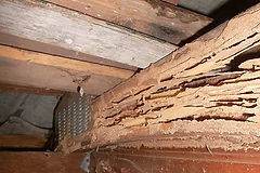 termite-damage-4.jpg