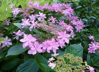 芒種の二十四節気ガーデン