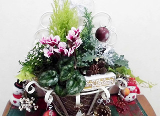 11月30日(木)クリスマスバスケット教室 募集中!
