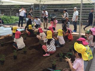 園児の苗植え