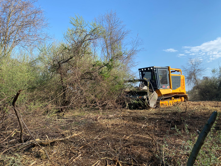 JRL_autumn_olive_removal_clearing.JPG