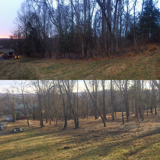 JRL_Before_after_trees.JPG