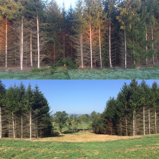 JRL_tree_clearing.jpg