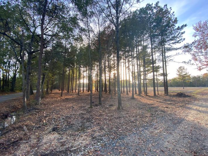 JRL_forest_thinning_sun.JPG
