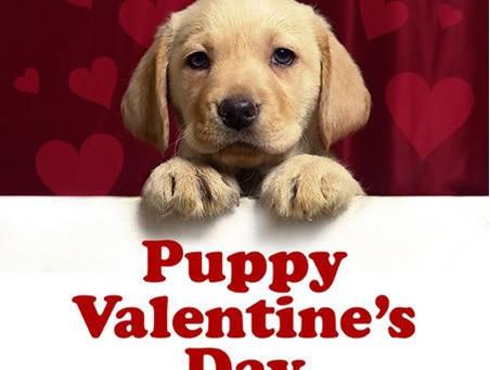 Puppy Valentine's Day Card Craft
